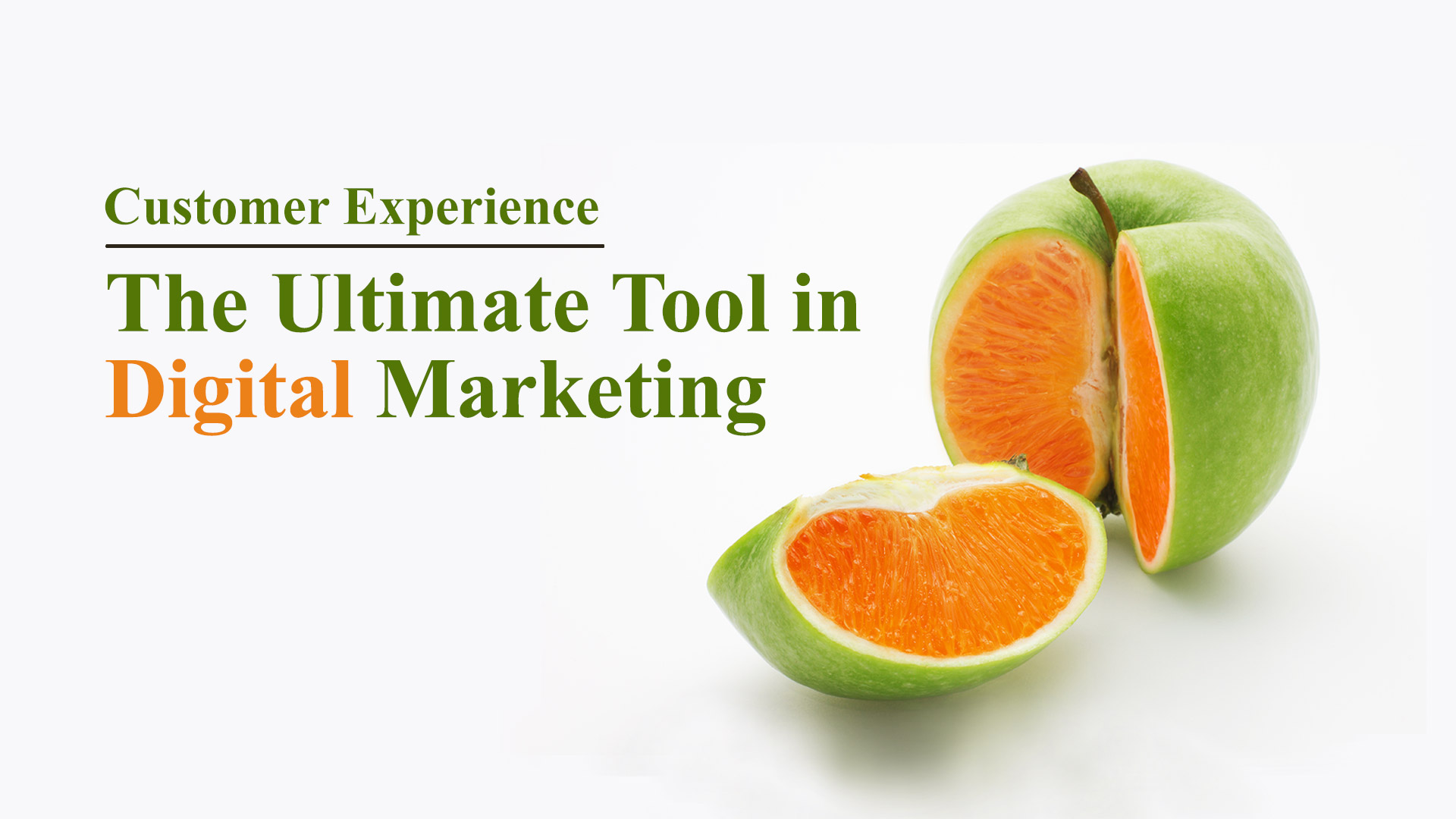 OSL Digital Marketing Tool